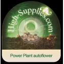 Power Plant autoflowering